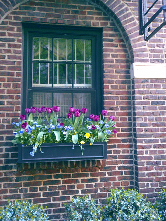Window flower box in NYC.